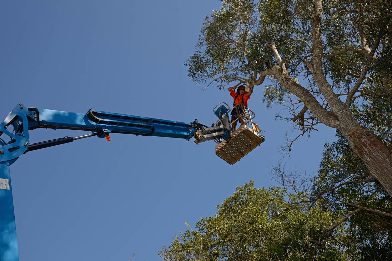 homme sur une nacelle qui coupe les branches très haute d'un arbre