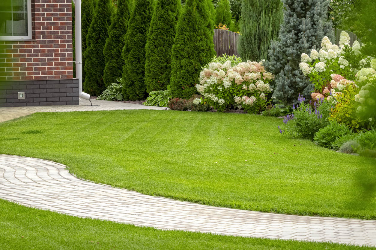 jardin avec du gazon