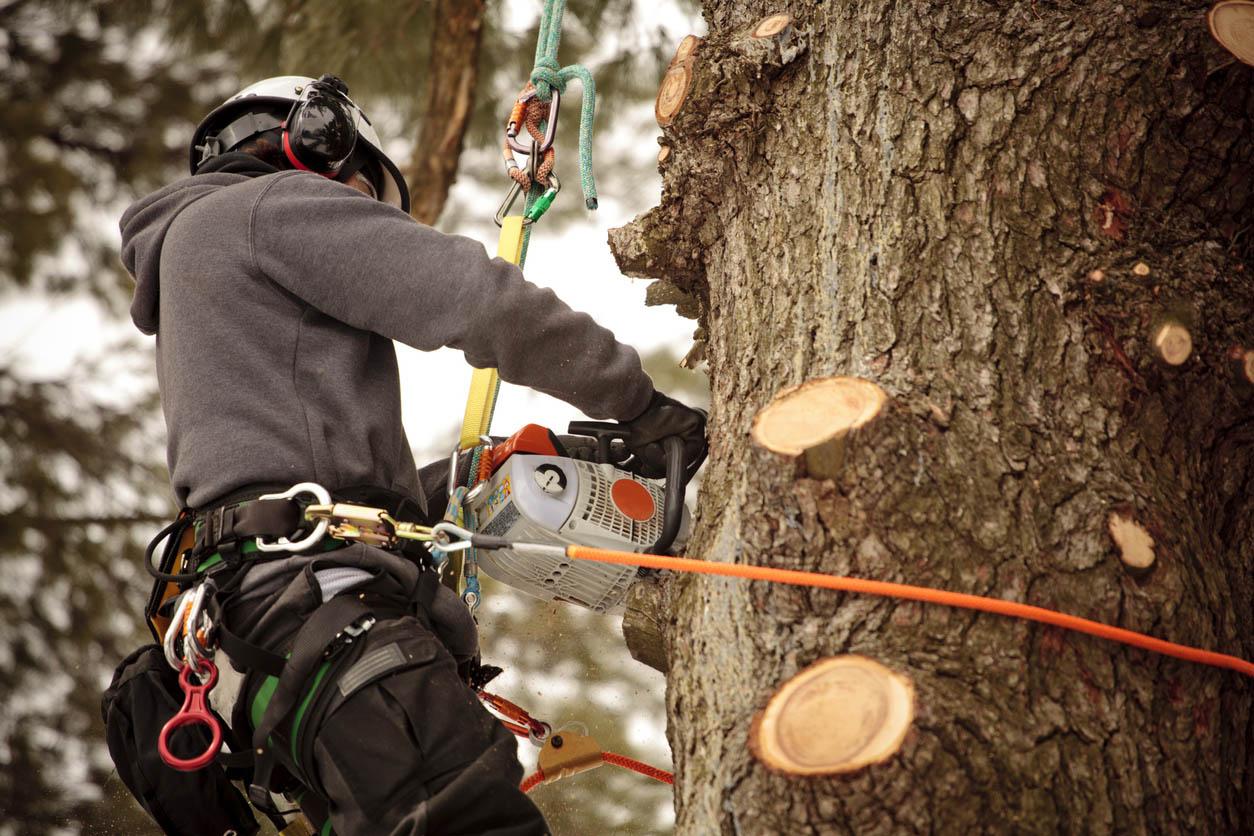 homme coupe les branches d'un arbre