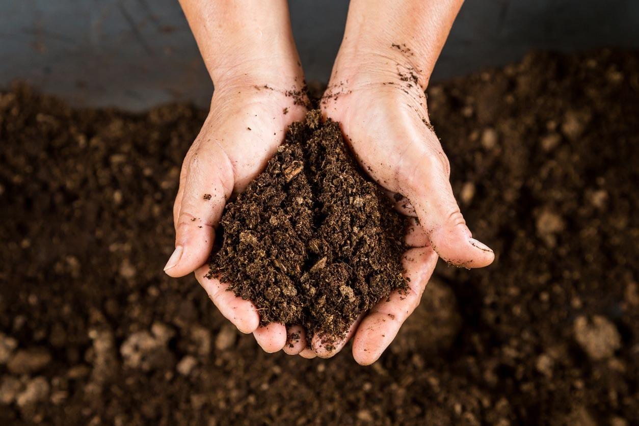 Gros plan des mains tenant du compost